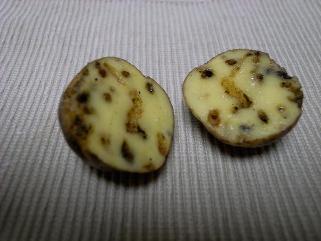 連作 障害 ジャガイモ